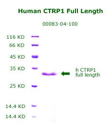 Human CTRP1 full length recombinant